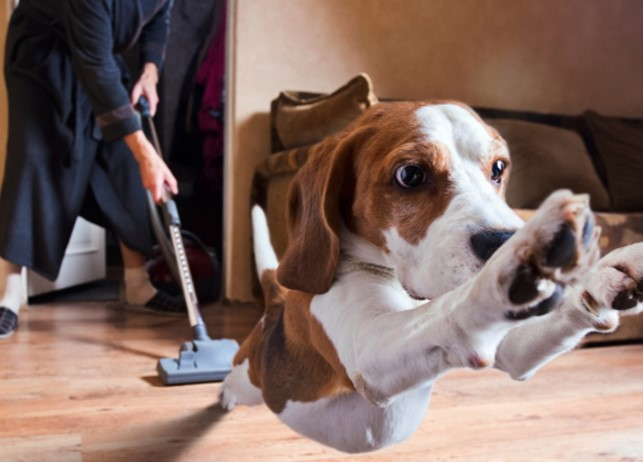 Pet Hair Vacuum Cleaner Could Cleaning Your Home Be Fun
