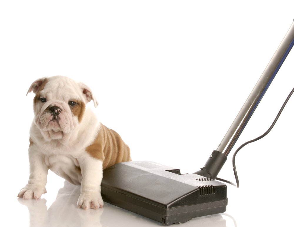 Ultimate Guide For Best Vacuum For Pet Hair